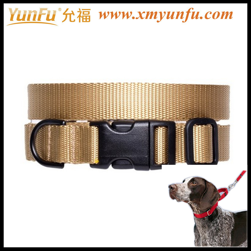 Flash Pet Collar Coppery western dog collar